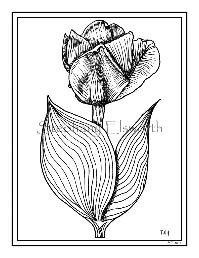 Tulip Printable Instant Download Coloring Page - Color ...